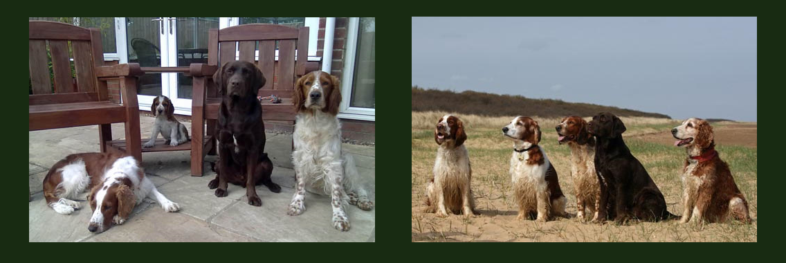 http://www.welshspringerspaniel.club/wp-content/uploads/2013/10/Home-Banner-9-1136x380.png